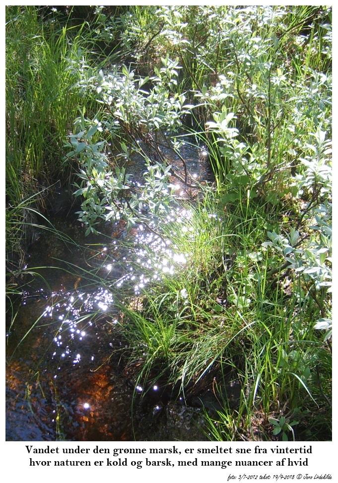 Vandet-under-den-grønne-marsk